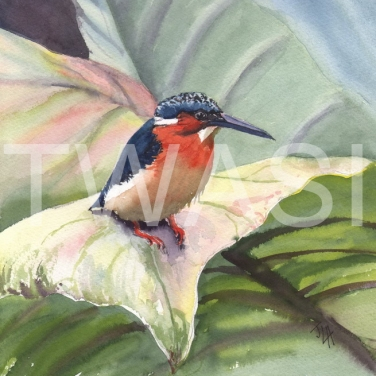 'Large Leaf Small Kingfisher' by Jennifer Horn Watercolour Framed 45 x 45 £200