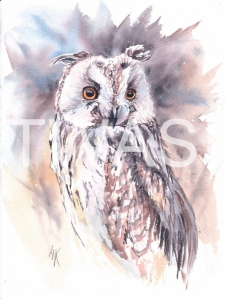'Long Eared Owl' by Jennifer Horn Watercolour Framed 33 x 43 £180