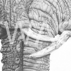 'Embrace' by Jess Pritchard Graphite Pencil Framed 53 x 42 Unframed 35 x 23 £360
