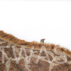 'Hitchhiker' by Jess Pritchard Coloured Pencil Framed 72x58 Unframed 53x38 £900