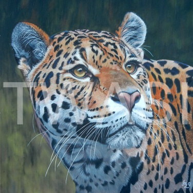 'Amber Alert' by Julie Longdon Coloured Pencil Framed 68x73 £675