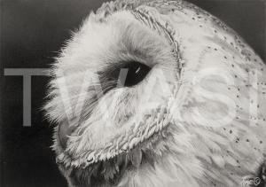 'Barn Owl' by Julie Longdon Graphite Framed 28 x 23 £195