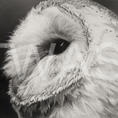 'Barn Owl' by Julie Longdon Graphite Framed 28 x 23 £195