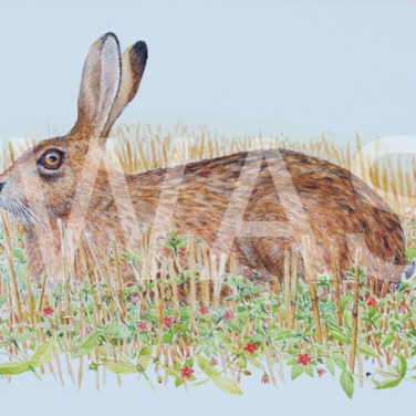 'Brown hare and scarlet pimpernel' by John Horton Framed 32 x 24 Watercolour £245