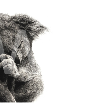 'Sleep Tight' by Jordan Price Carbon Pencil Unframed 30 x 15cm £295 SOLD