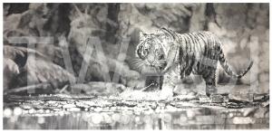 'Splash of Focus' by Jordan Price Graphite Pencil Unframed 70 x 35cm £995