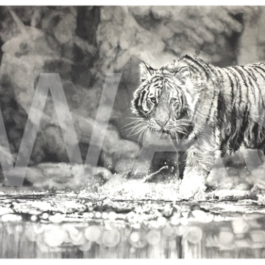 'Splash of Focus' by Jordan Price Graphite Pencil Unframed 70 x 35cm £995