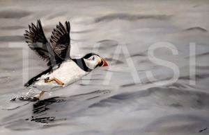 'Take Off!' by Karen Markham Coloured Pencil & Panpastel Unframed 55.88x 41.91 £175
