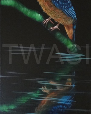 'Kingfisher Reflections' by Laura Gibbons Oils on Canvas Framed 56 X 26 £250