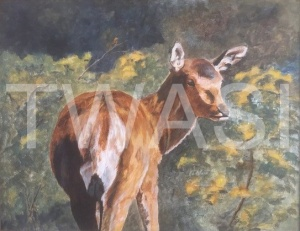 'Red Deer The Yearling' by Leslie Read Acrylic Framed 40.64 x 50.8 £230