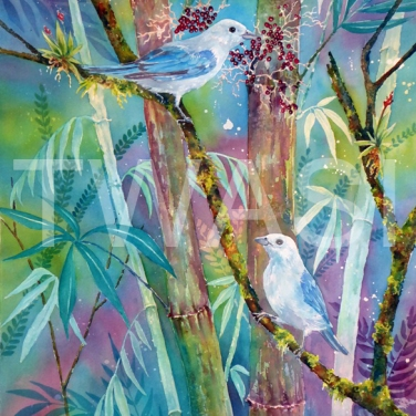 'Blue Grey Tanagers' by Linda Travers Smith Watercolour Unframed 30 x 50 £220