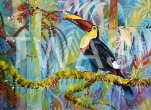 'Chestnut Mandibled Toucan' by Linda Travers Smith Watercolour Unframed 30 x 50 £210