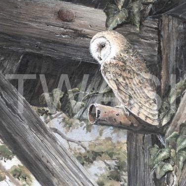 'Barn Owl' by Marion Tuffrey Acrylic Unframed 20 x 25 £160