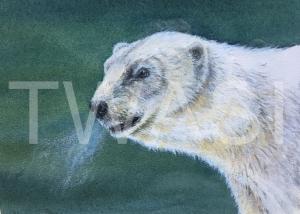 'Polar Bear' by Marion Tuffrey Watercolour Unframed 31 x 36 £150