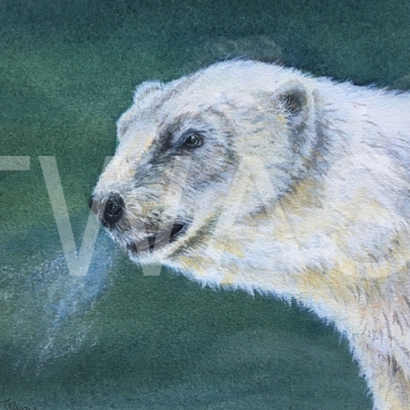 'Polar Bear' by Marion Tuffrey Watercolour Unframed 31 x 36 £150