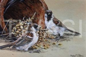 'Sparrows' by Marion Tuffrey Acrylic Unframed 26 x 32 £150