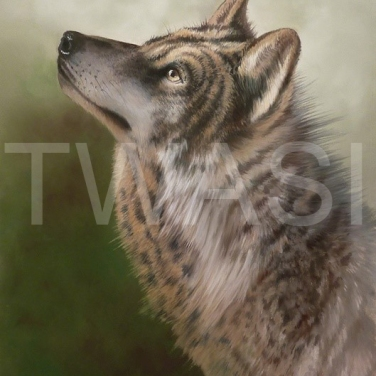 'Grey Wolf' by Mark Whittaker Pastel Framed 41 X 51 cm £625