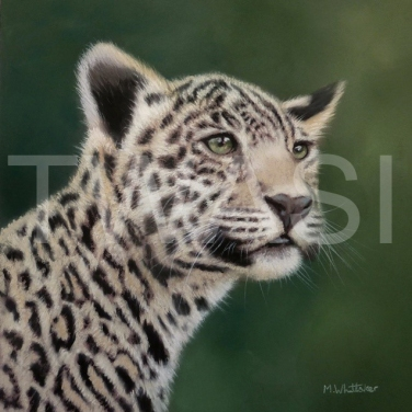 'Jaguar Cub' by Mark Whittaker Pastel Framed 50 x 50 cm £625