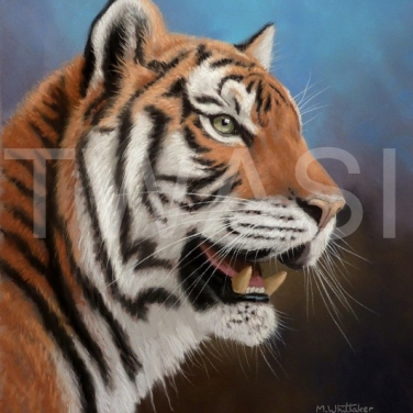 'Tiger' by Mark Whittaker Pastel Framed 51 X 61 cm £625