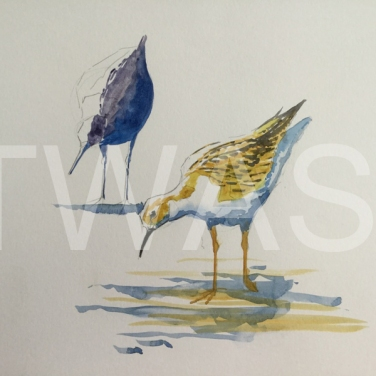 'Black Tailed Godwits' field study by Martin Gibbons Watercolour Unframed 42 x 30 £250