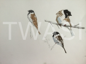 'Reed Buntings' field study by Martin Gibbons Watercolour Unframed 42 x 30 £250