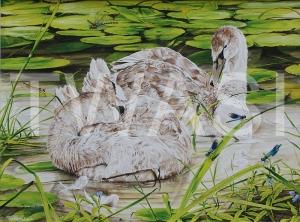 'Lazy Days' by Martin Horsfield Gouache Framed Size: 85.7 x 71.8 £795