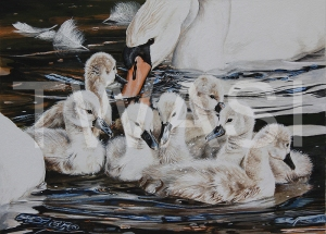 'The New Arrivals' by Martin Horsfield Gouache Framed Size: 44.4 x 37.5 £295