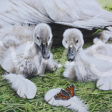 'Wings of a Different Kind' by Martin Horsfield Gouache Framed Size: 44.4 x 37.5 £295