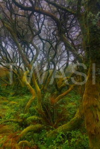 'Enchanted Forest II' by Martin Raskovsky Digital Manipulated Photography Unframed and un-mounted 40x60 Price £180
