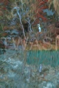 'Ermintrude II' by Martin Raskovsky Digital Manipulated Photography Unframed and un-mounted 40x60 Price £180