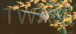 'Autumn Tawny Owl' by Martin Rumary Acrylics Unframed 35 x 61 £580
