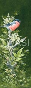 'Bullfinch and Meadow Sweet' by Martin Rumary Acrylics Unframed 62.5 x 31.7 £425