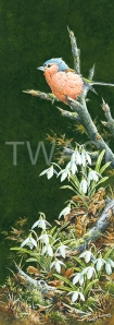 'Chaffinch and Snowdrops' by Martin Rumary Acrylics Unframed 62.5 x 31.7 £425