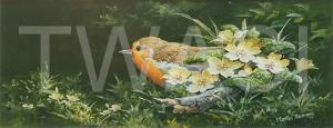 'Robin and Primroses' by Martin Rumary Acrylics Unframed 26.7 x 47 £250