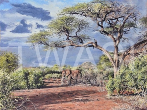 'After the rain' (Samburu Kenya) by Neal Griffin 61 (h) x 76 (w) Framed / 50 (h) x 65 (w) unframed Oil £950