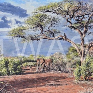 'After the rain' (Samburu Kenya) by Neal Griffin 61 (h) x 76 (w) Framed / 50 (h) x 65 (w) unframed Oil £950
