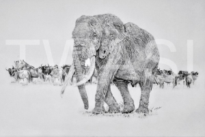 'Majestic' by Nick Barker Pencil Framed 94cm x67cm £1,500