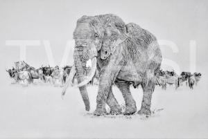'Majestic' by Nick Barker Pencil Framed 94cm x67cm £1,500