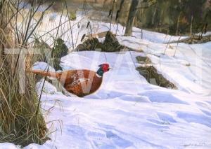 'Pleasant Pheasant' by Nigel Buckels Gouache Unframed 44 x 30 £490