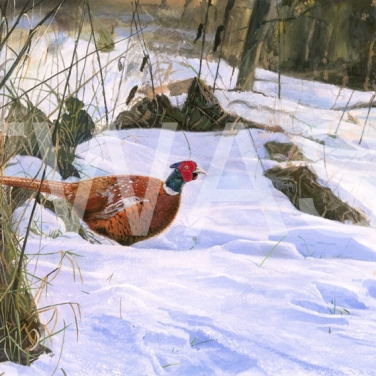 'Pleasant Pheasant' by Nigel Buckels Gouache Unframed 44 x 30 £490