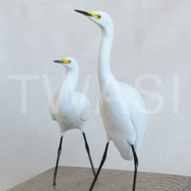 'Little Egrets' by Pam Knight Mixed media sculpture 20 x 21 x17 £290