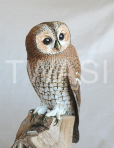 'Tawny Owl' by Pam Knight Mixed media sculpture 37 x 23 x 15 £1,850