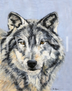 'Gaze of a Wolf' by Ros Rouse Oil on canvas Unframed 40 x 30 £395