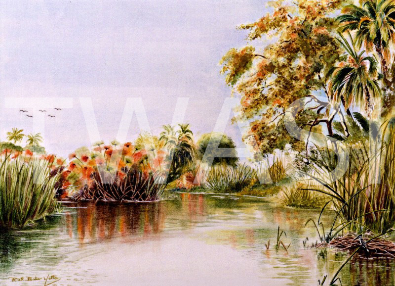 'Reflections' by Ruth Baker Walton Watercolour Framed 57 x 47 £105