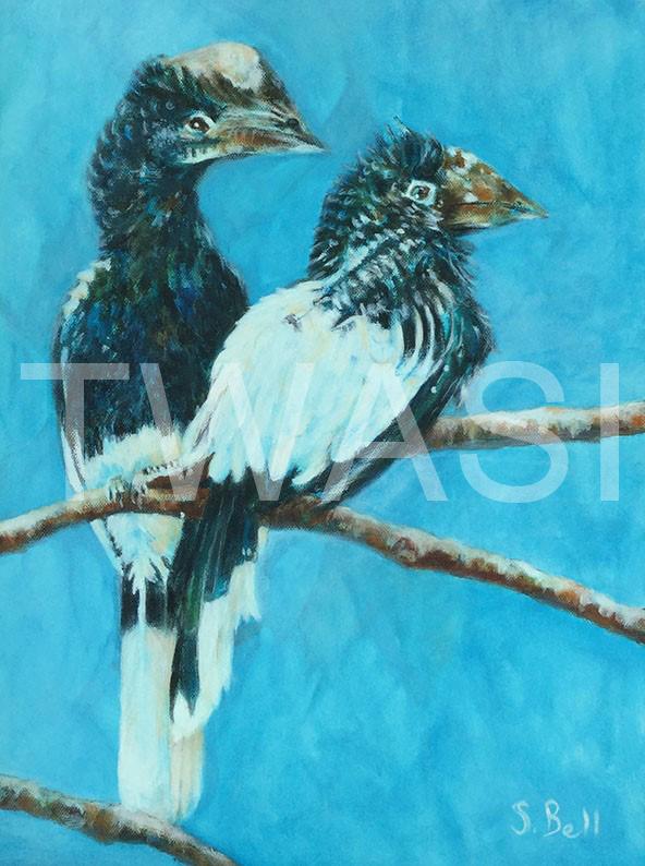 'Hornbills' by Sandy Bell Acrylic Framed 33.5 x 43.5 cms Price £325