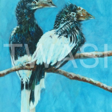 'Hornbills' by Sandy Bell Acrylic Framed 33.5 x 43.5 cms Price £325