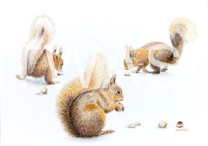 'Nut crackers' by Sarais Crawshaw Colour pencil Unframed 41x 51 £250