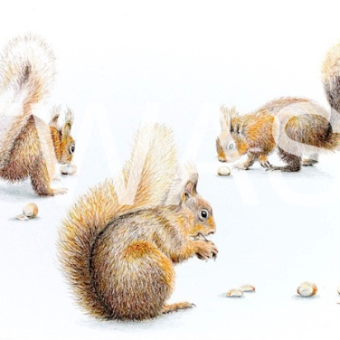 'Nut crackers' by Sarais Crawshaw Colour pencil Unframed 41x 51 £250