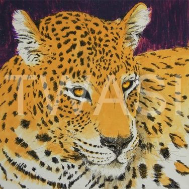 'Golden Leopard' by Stephen Hand Acrylic with glitter Unframed 40 x 40 £300