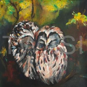 'Owl 2' by Varsha Manglam Acrylic on canvas Unframed 30x30 £40
